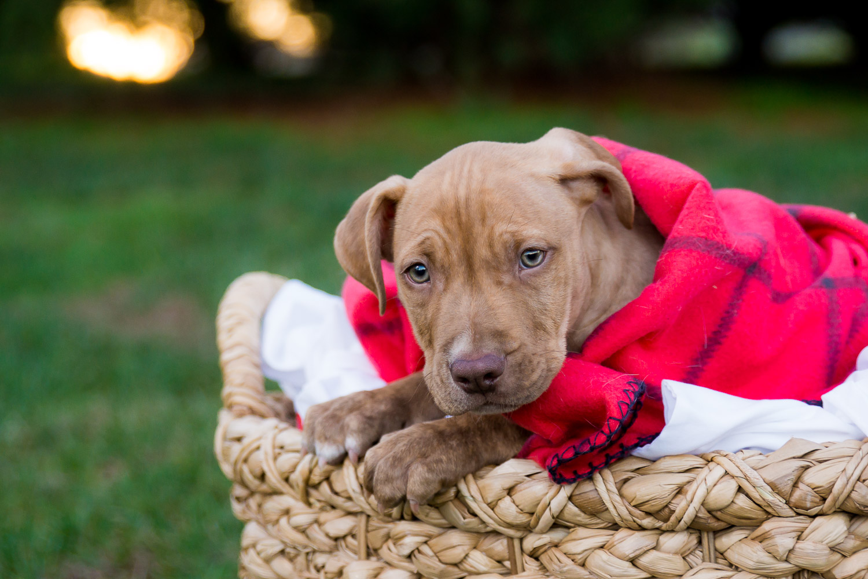 Professional Pet Photography - Dog Photographer