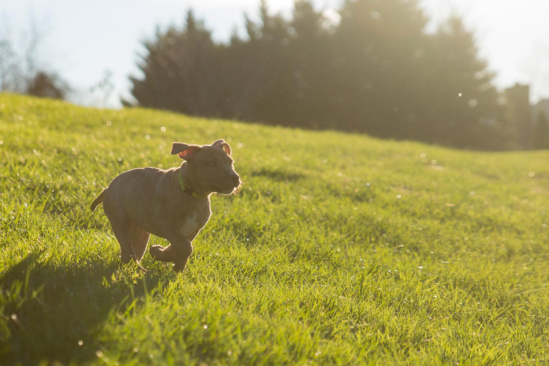 Dog Photographer - Pet Photography-1.jpg
