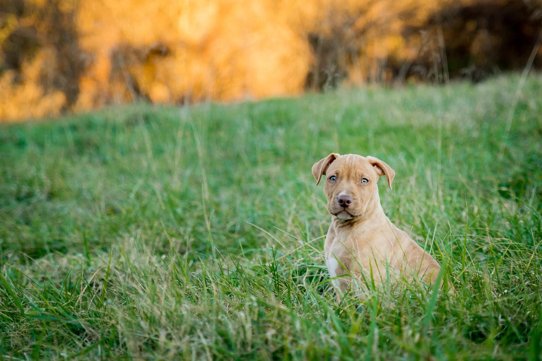 Dog Photographer - Pet Photography-3.jpg