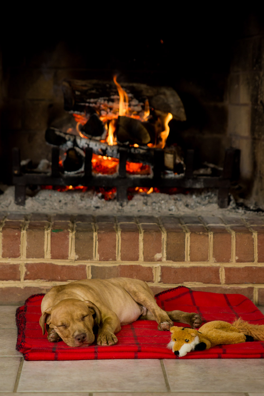 Dog Photographer - Pet Photography-6.jpg