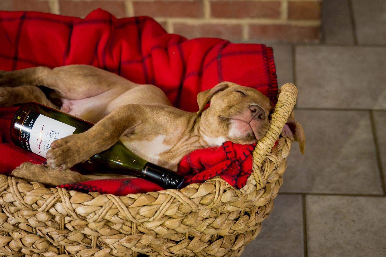 Dog Photographer - Pet Photography-7.jpg