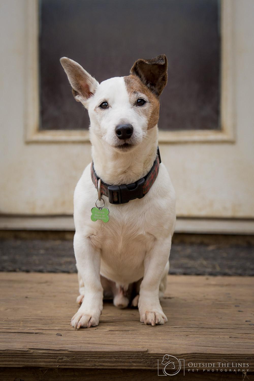 Wag-A-Tail - Maryland Dog Photographer