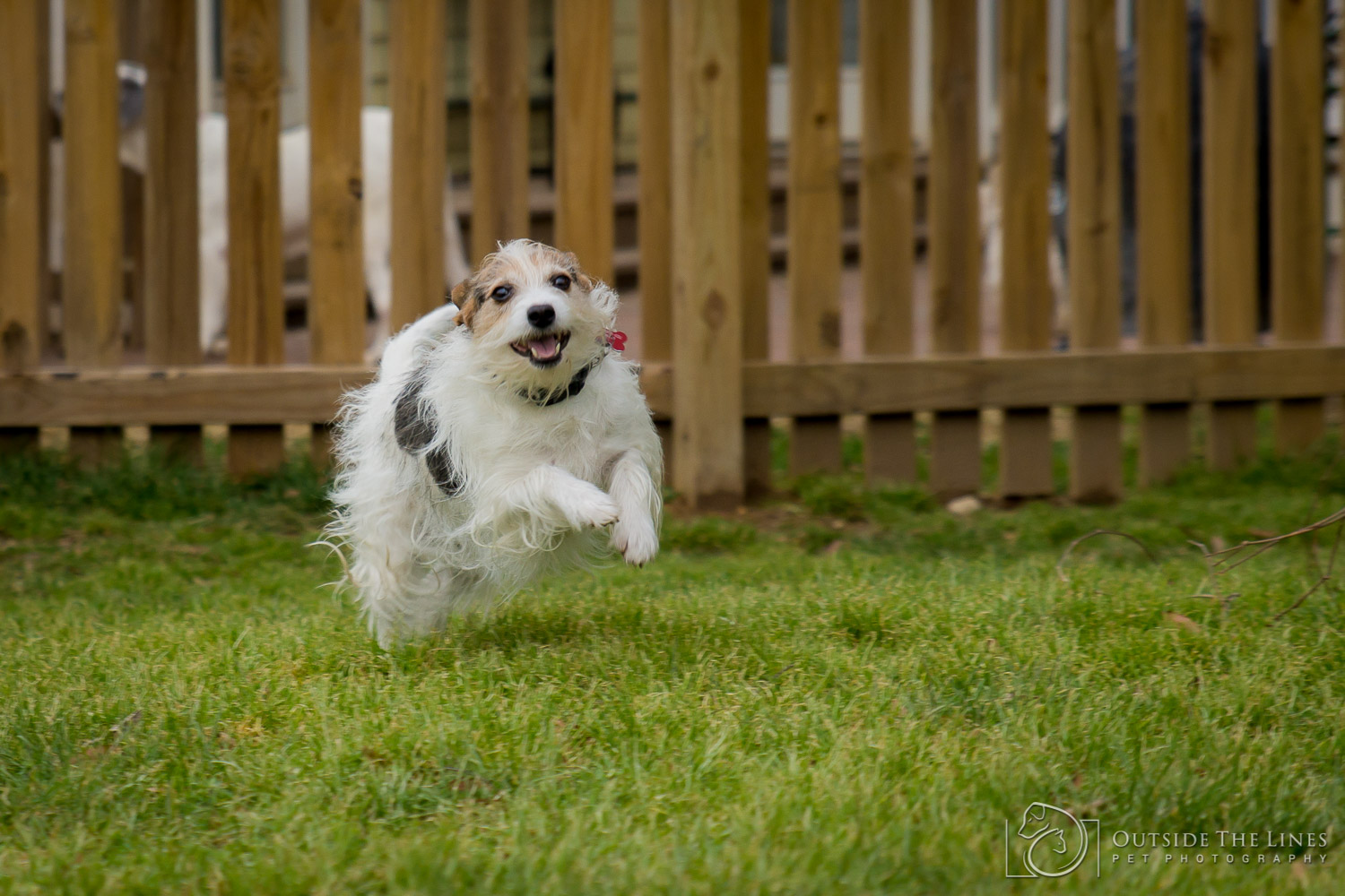 Wag-A-Tail Pet Photography 2