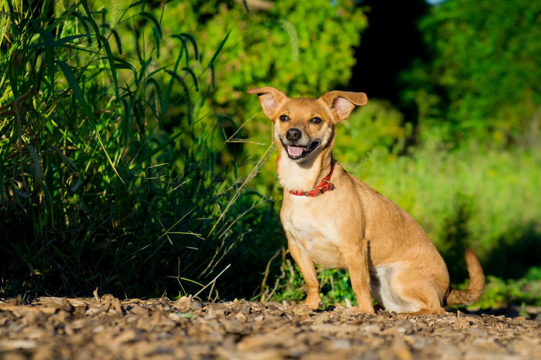Dog Sitting Near The Grass - Pet Photographer Maryland