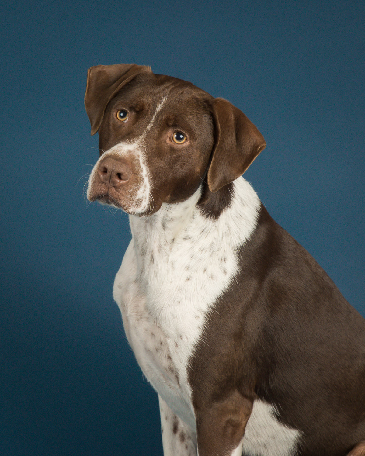 Have you dog photographed on our new beautiful blue backdrop