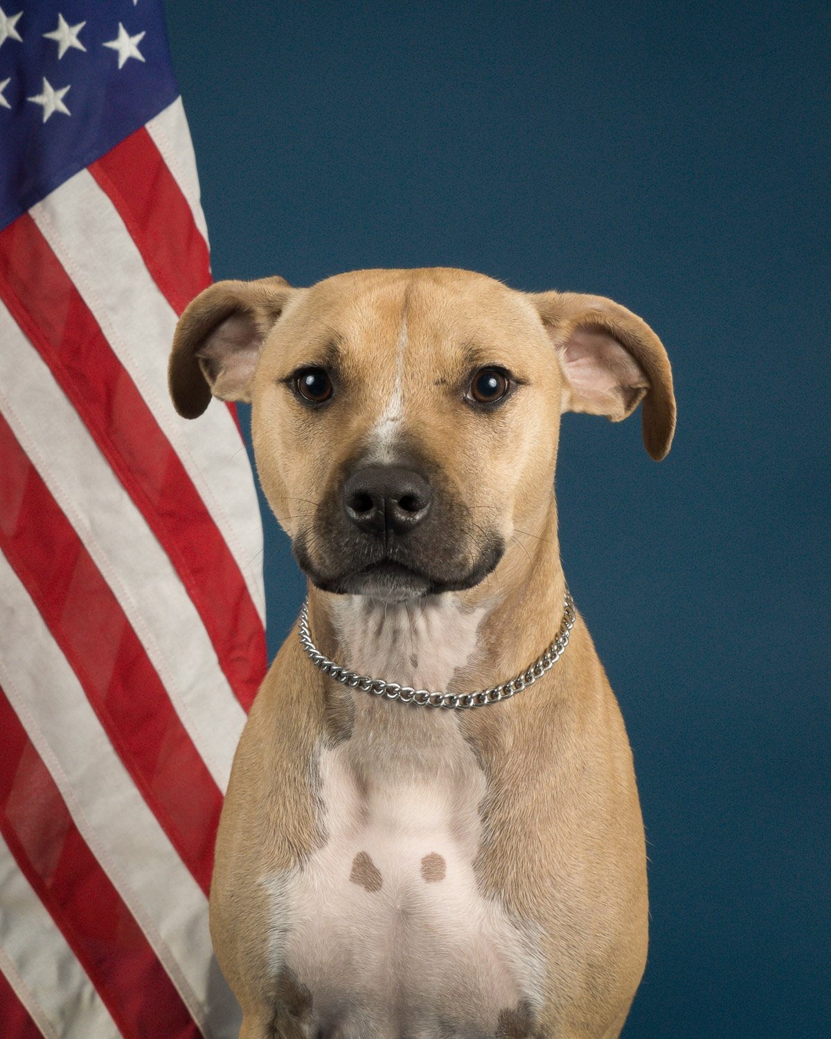 Capture you pet's political head shot with the American flag... just in time for the election.