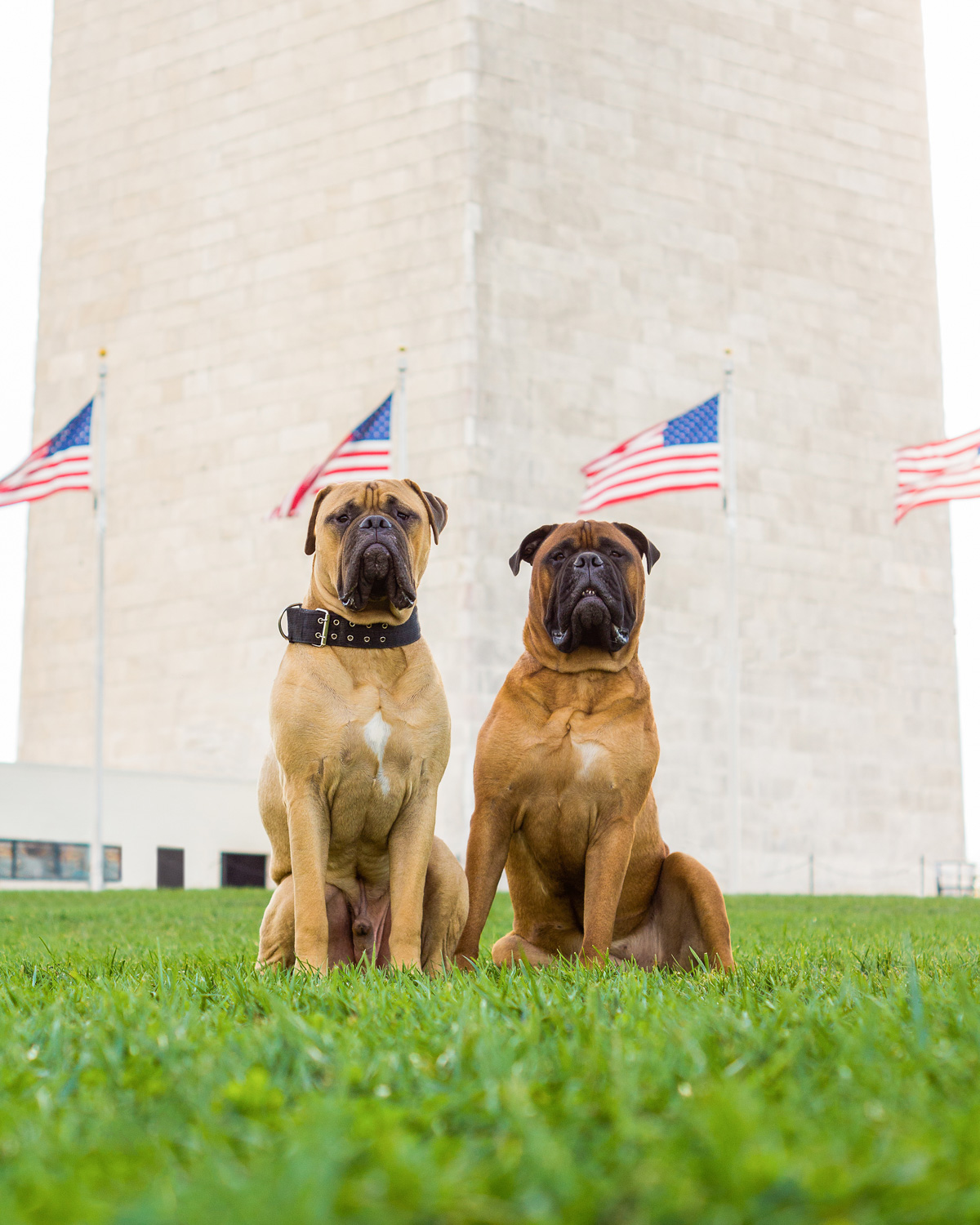 Lincoln (Left) and Rooster (Right) pose in front of the Washington Monument.