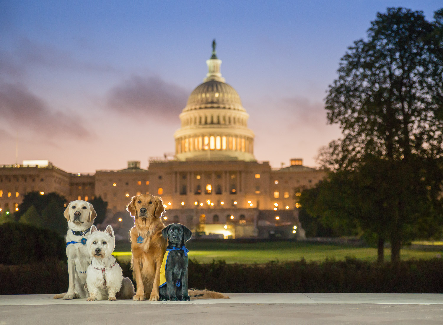 During the sunrise Erin's dogs sat perfectly in front of the US Capitol Building.