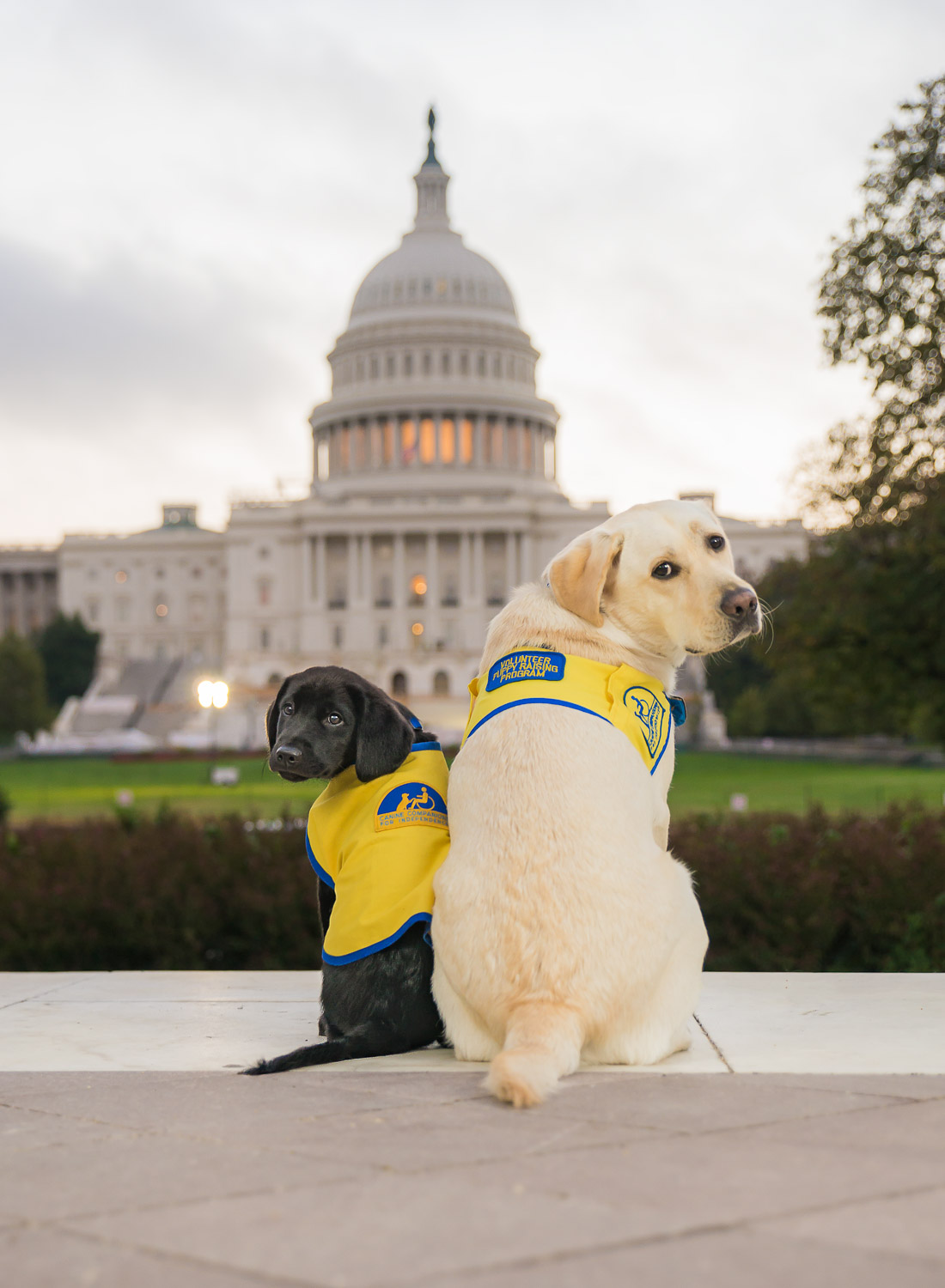 Service Dogs in Training - Outside The Lines Pet Photography