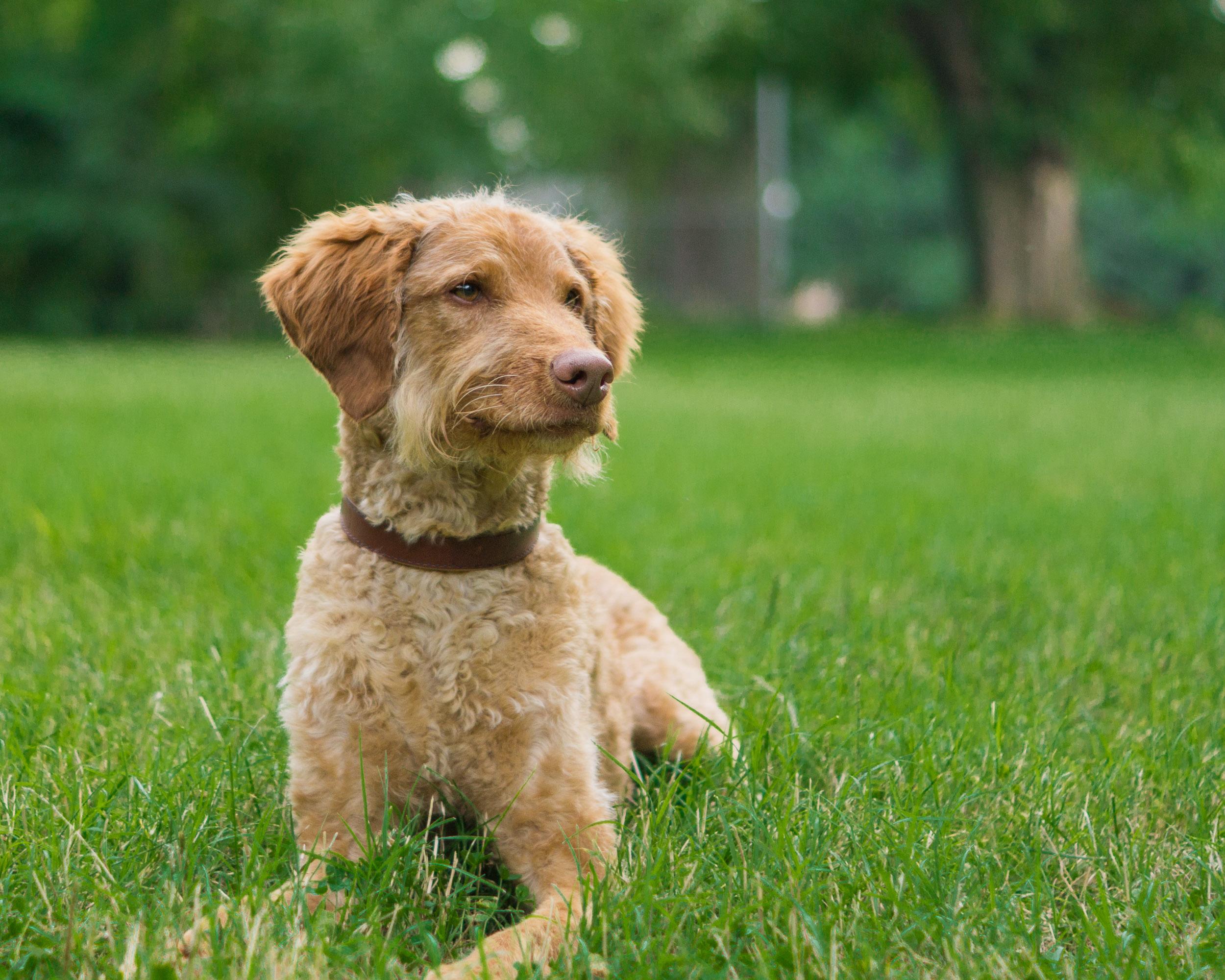 Dog Photographer in Washington, DC