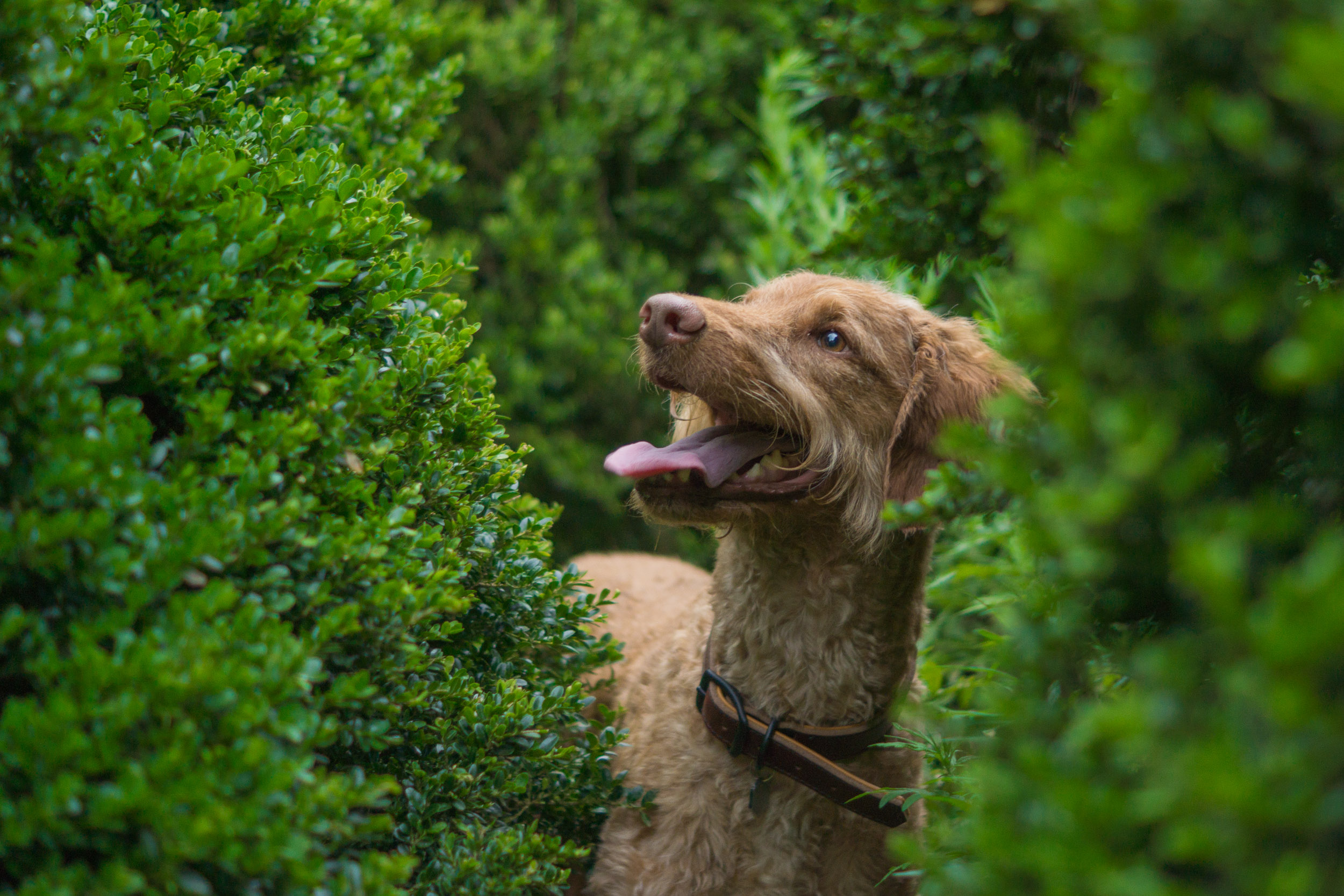 Pet Photographer - Georgetown Neighborhood