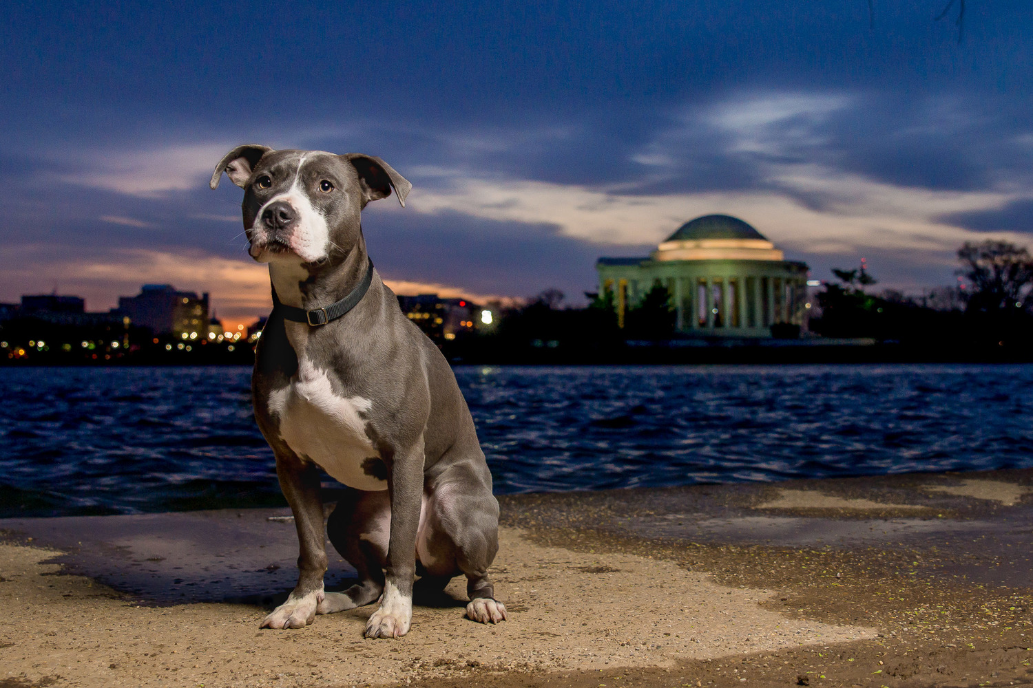 Athenia really stands out at the Jefferson Memorial in DC.