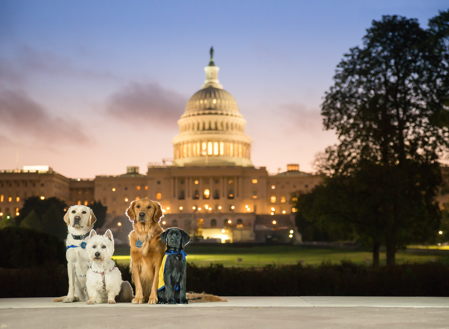 A Pet Photographer Hosting Event in DC #3.jpg