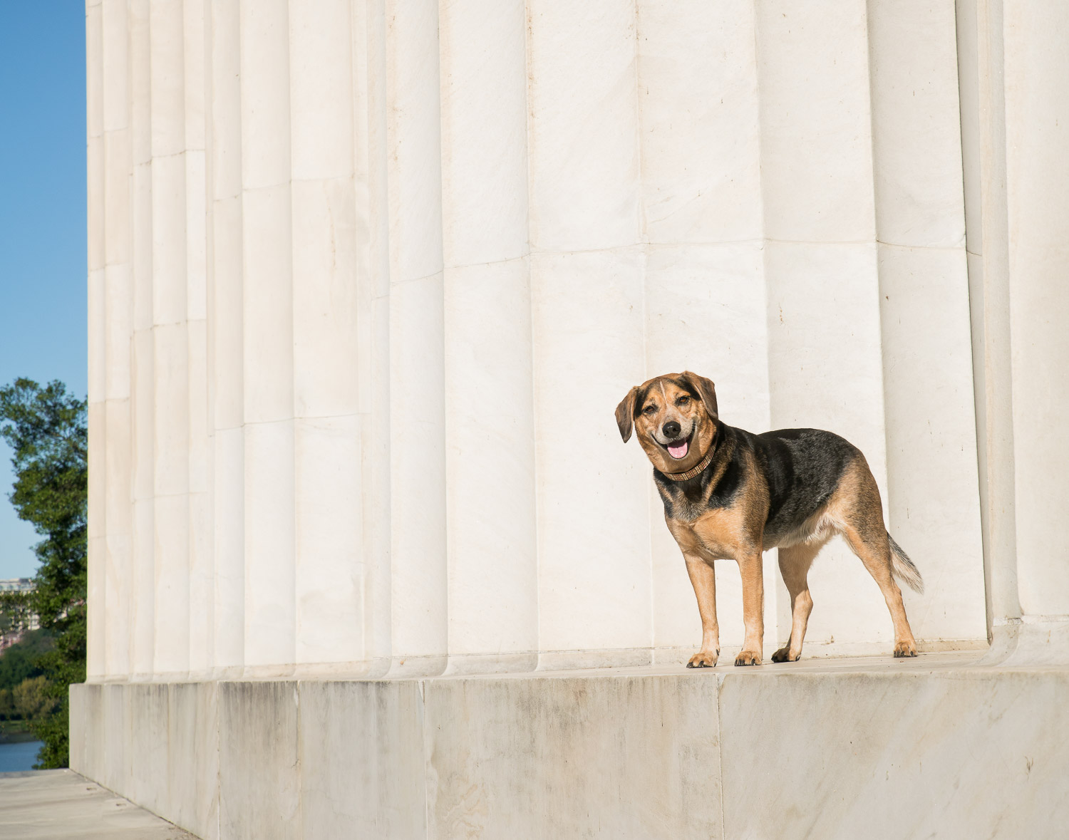 Just look at that smile from a true DC dog... this was taken from the side of the memorial