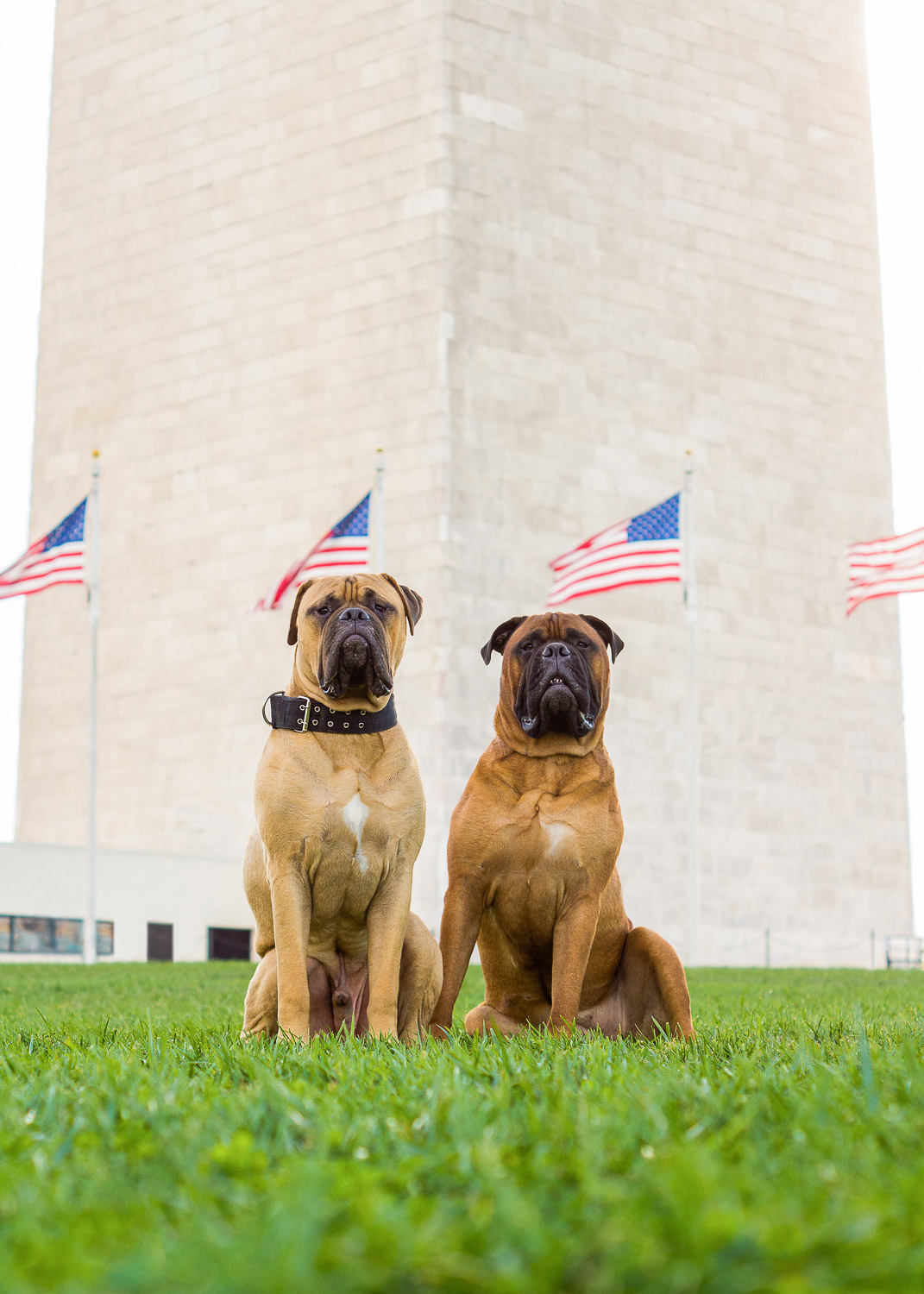 These two sat perfectly for their Big Dogs of DC session, right next to the Washington Monument