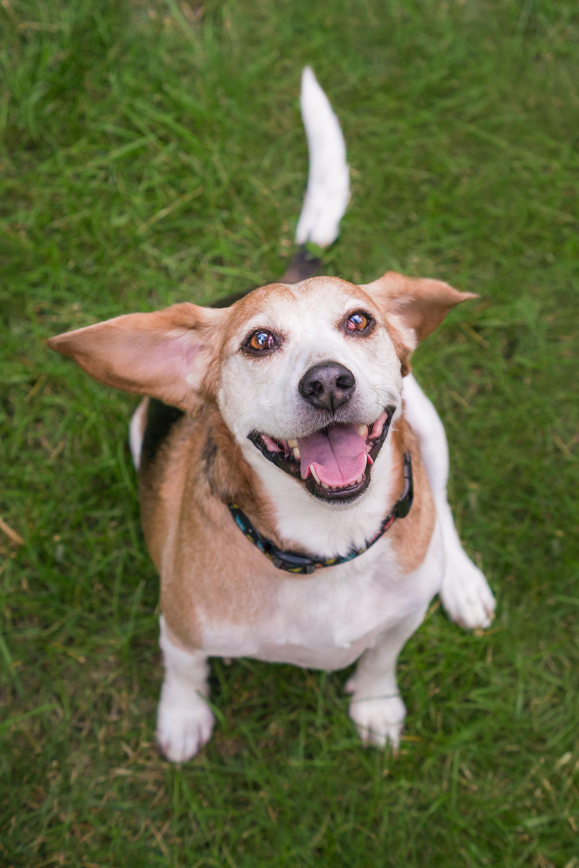 Happy Dog Photographer in Virginia