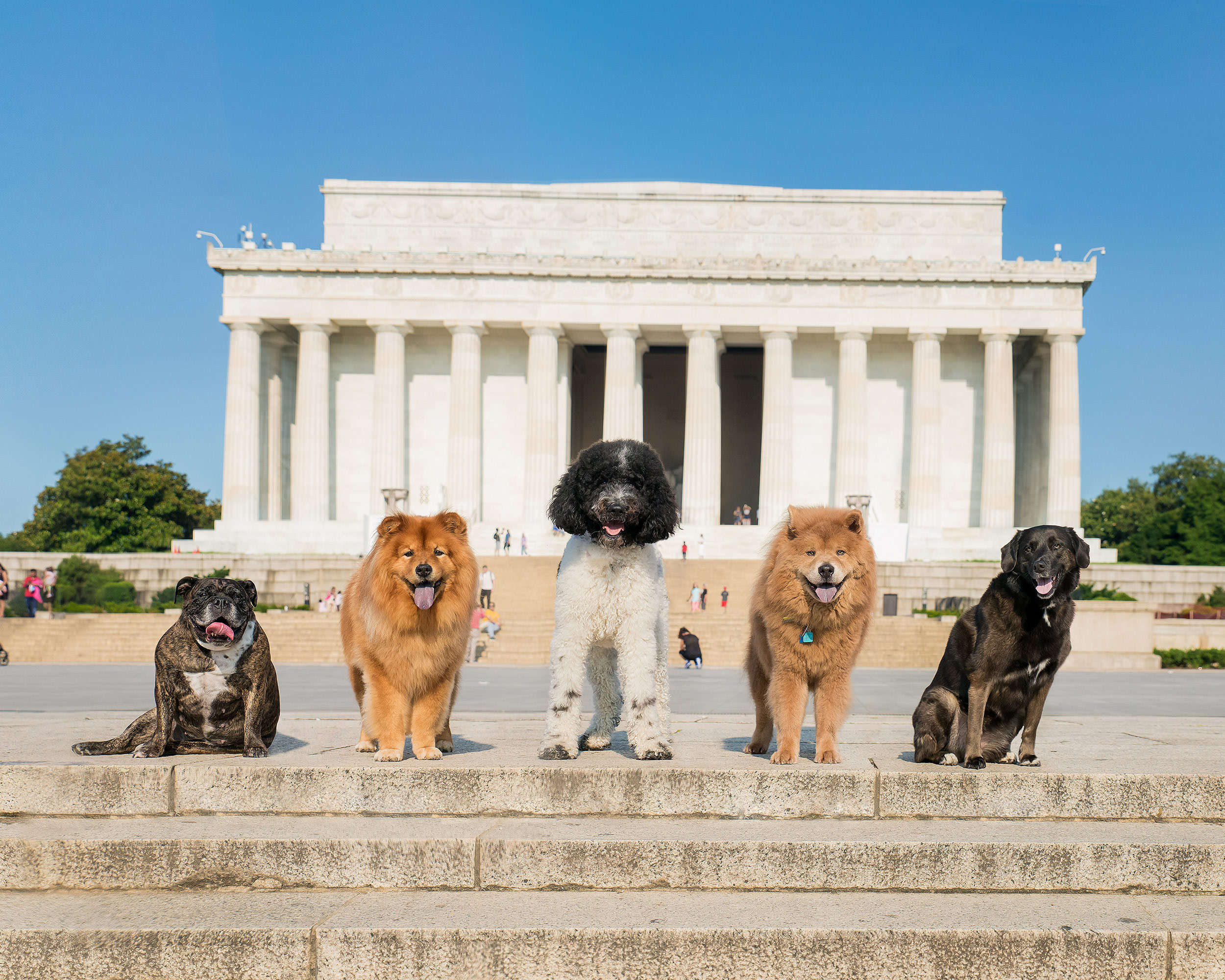 Dogs Photographed at Lincoln Memorial.jpg