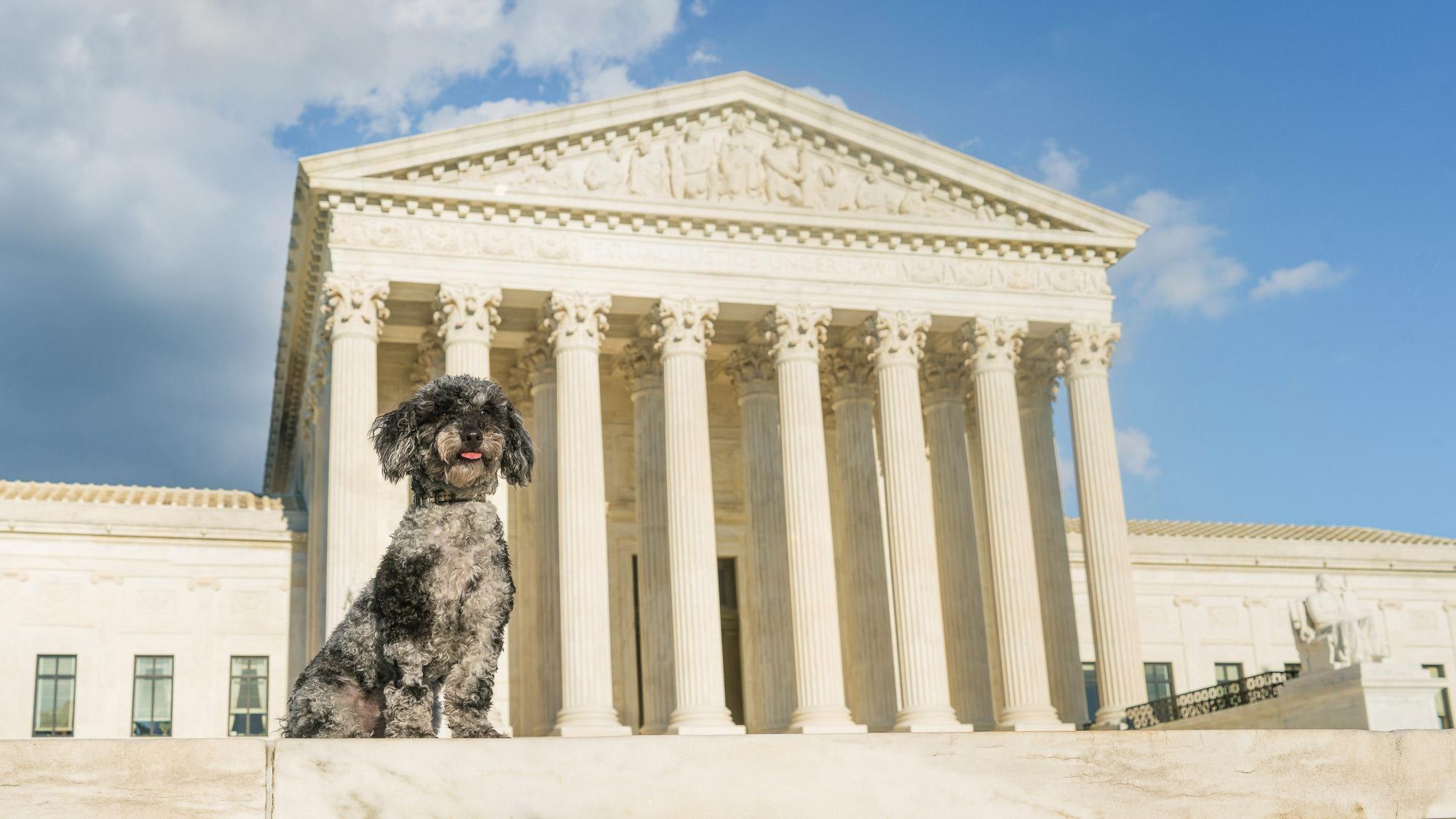 Dog Photographer - Supreme Court DC.jpg