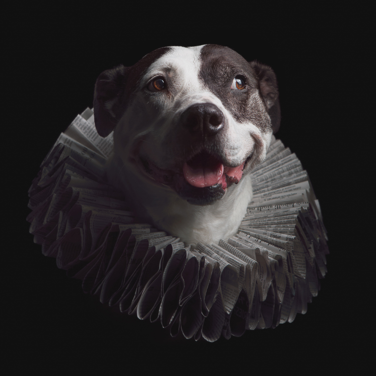 whimsical dog portrait studio art ruff collar baltimore.jpg