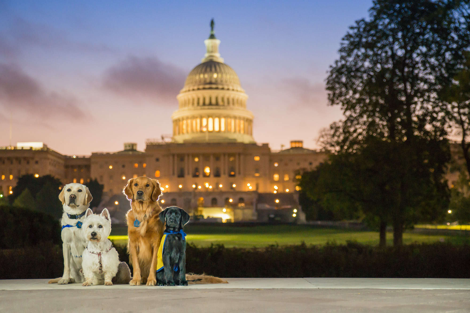 Dogs in front of US Capitol Building in Washington DC at Sunrise