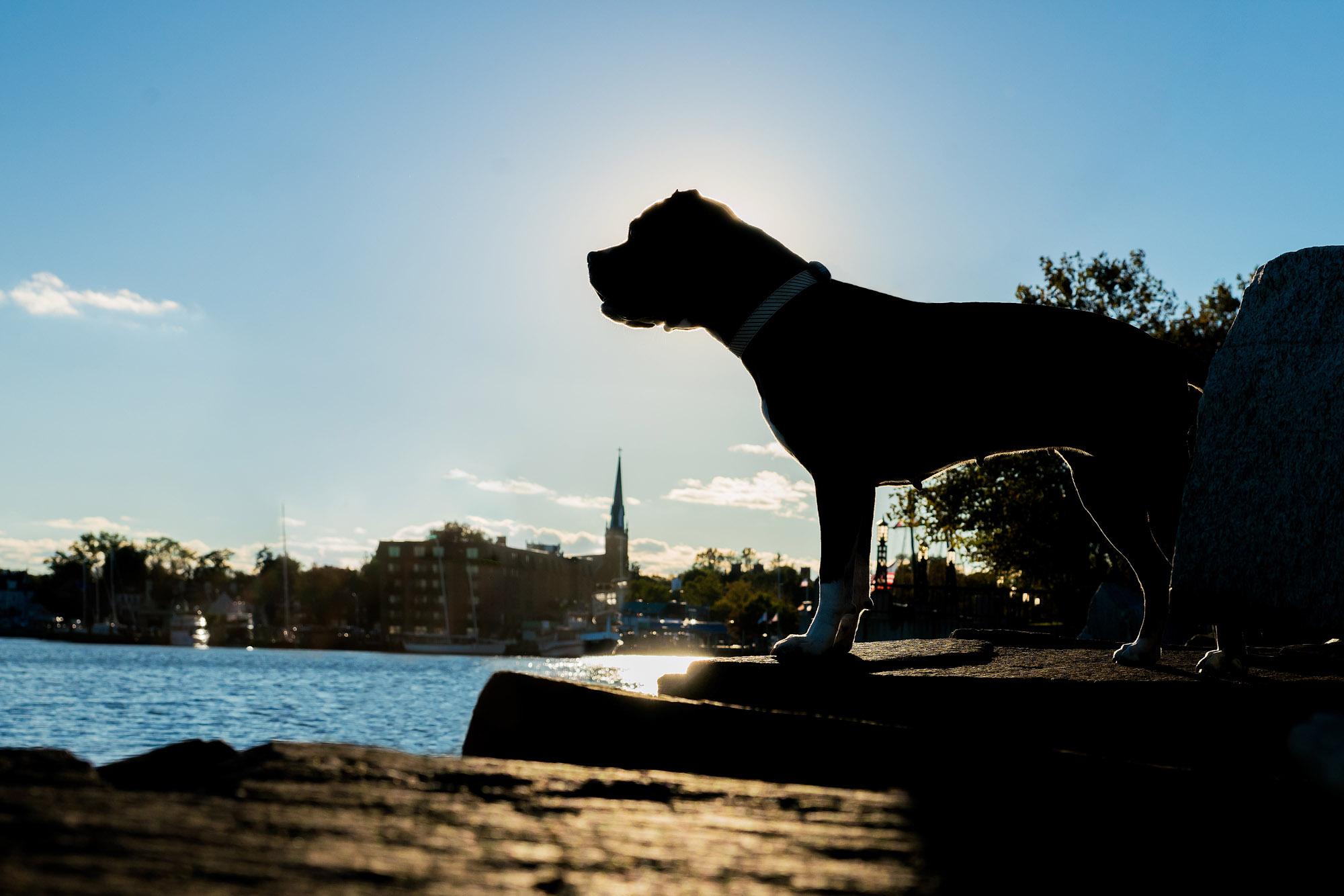 Silhouette of a dog near the ocean