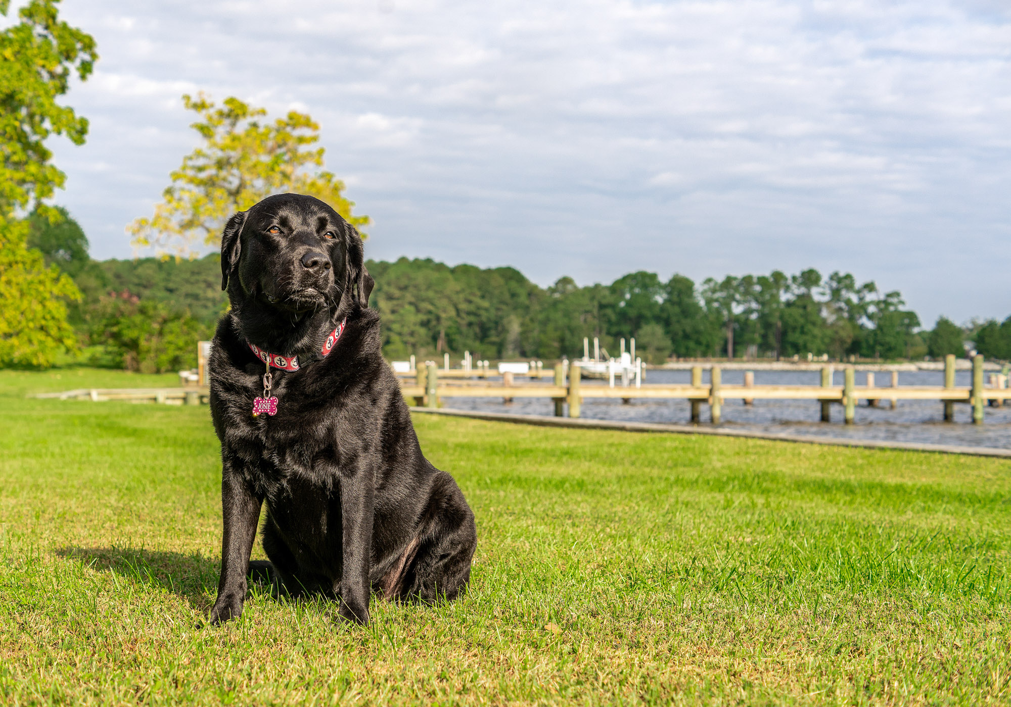 Black Lab in St Michaels Maryland
