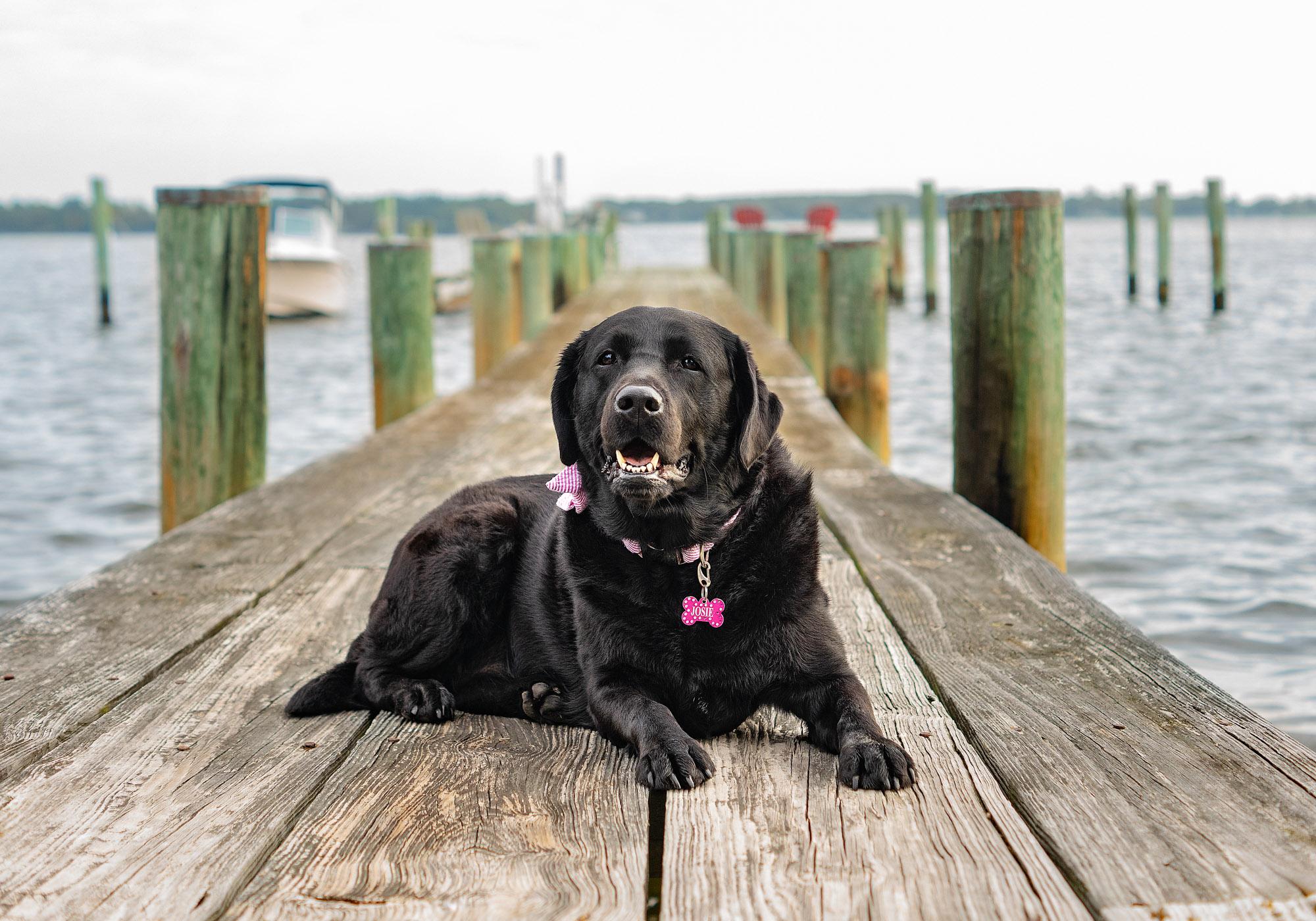 Black Lab - Dog on the dock - Pet Photographer