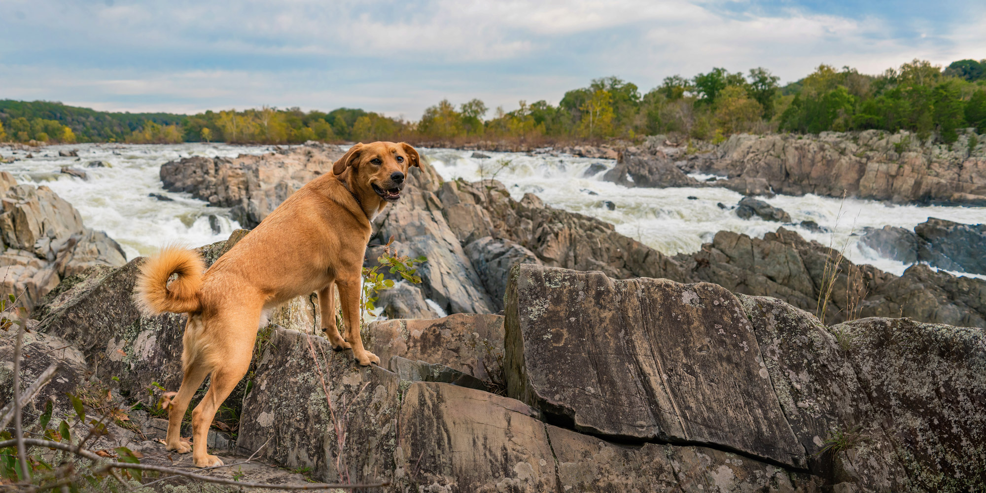 Dog with paws up on the rocks in Great Falls Virginia