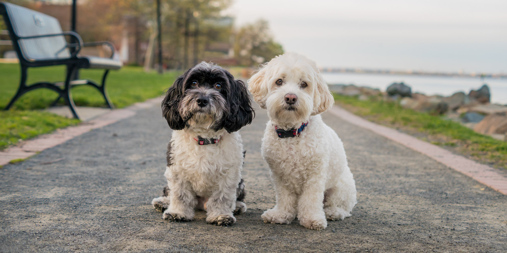 Two dogs together in Alexandria Virginia at the park.