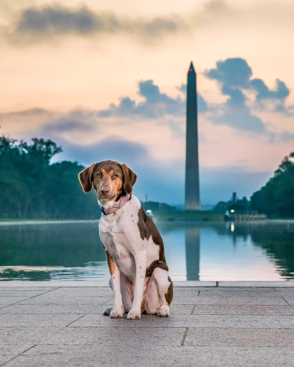 Washington Monument Sunrise in the Background with A Dog Sitting.jpg