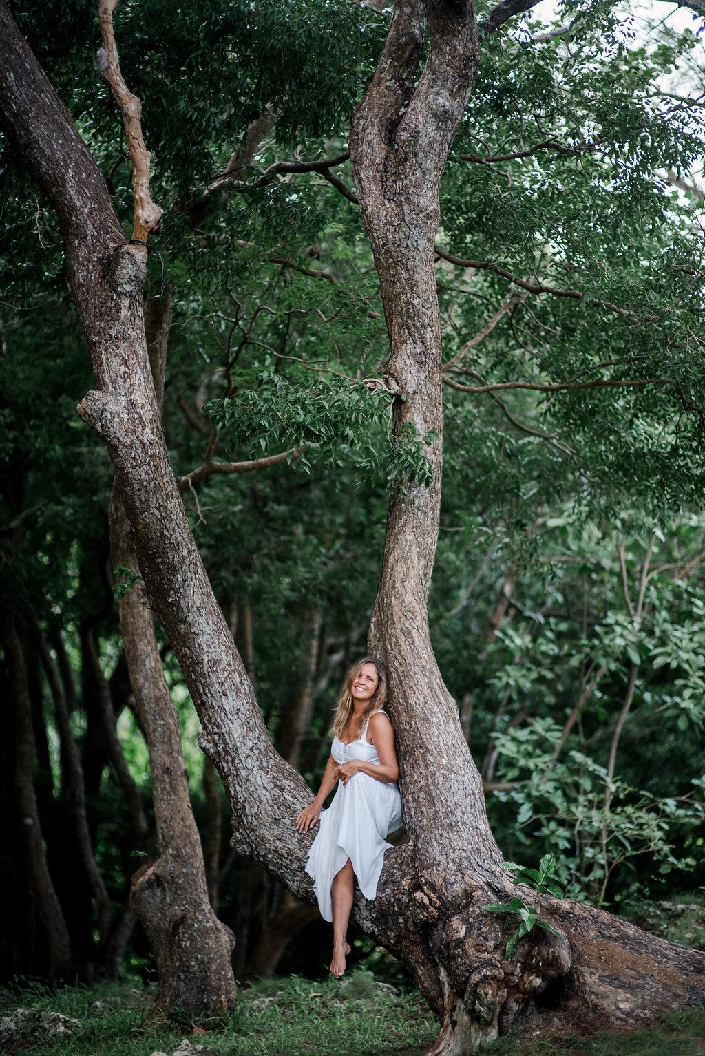 the fairy trees of barbados - the mahogany tree
