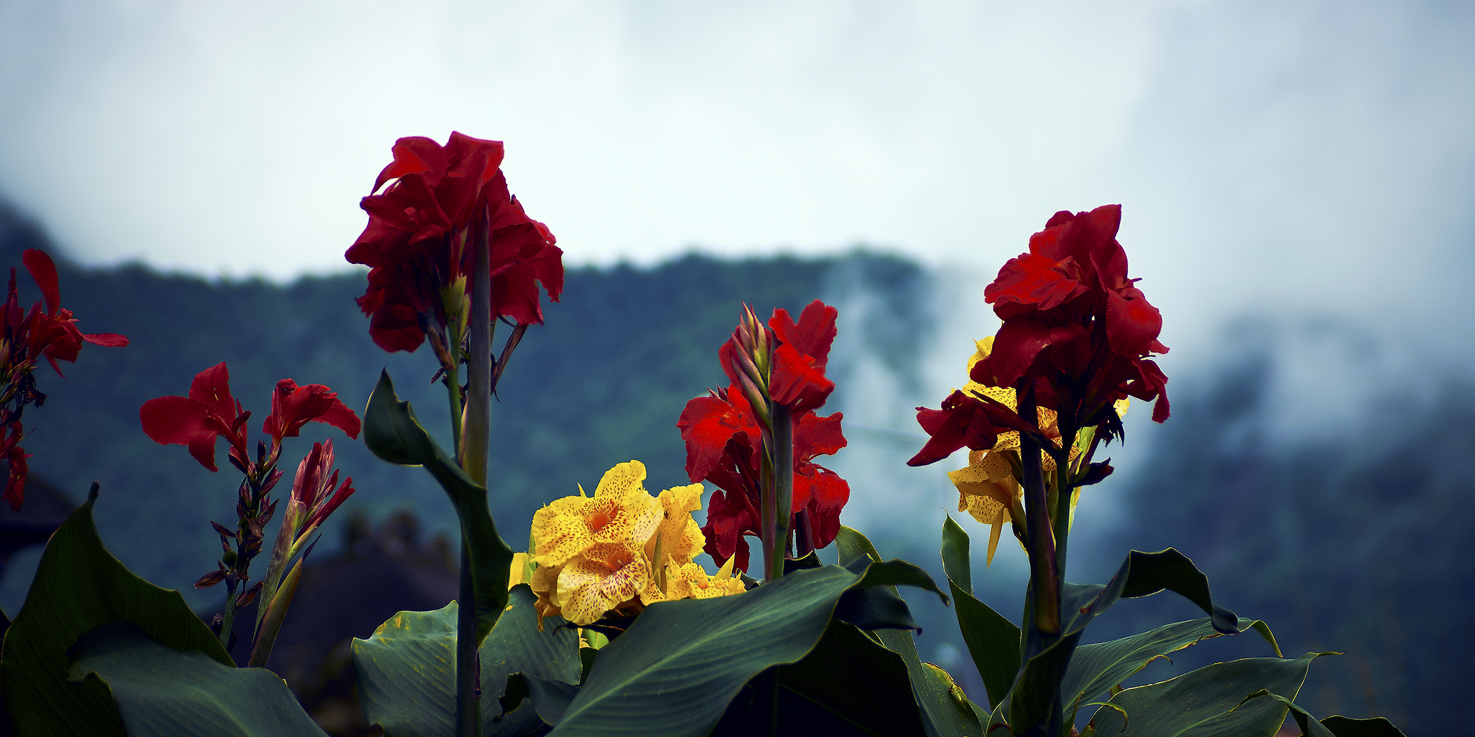 Temple_Flowers