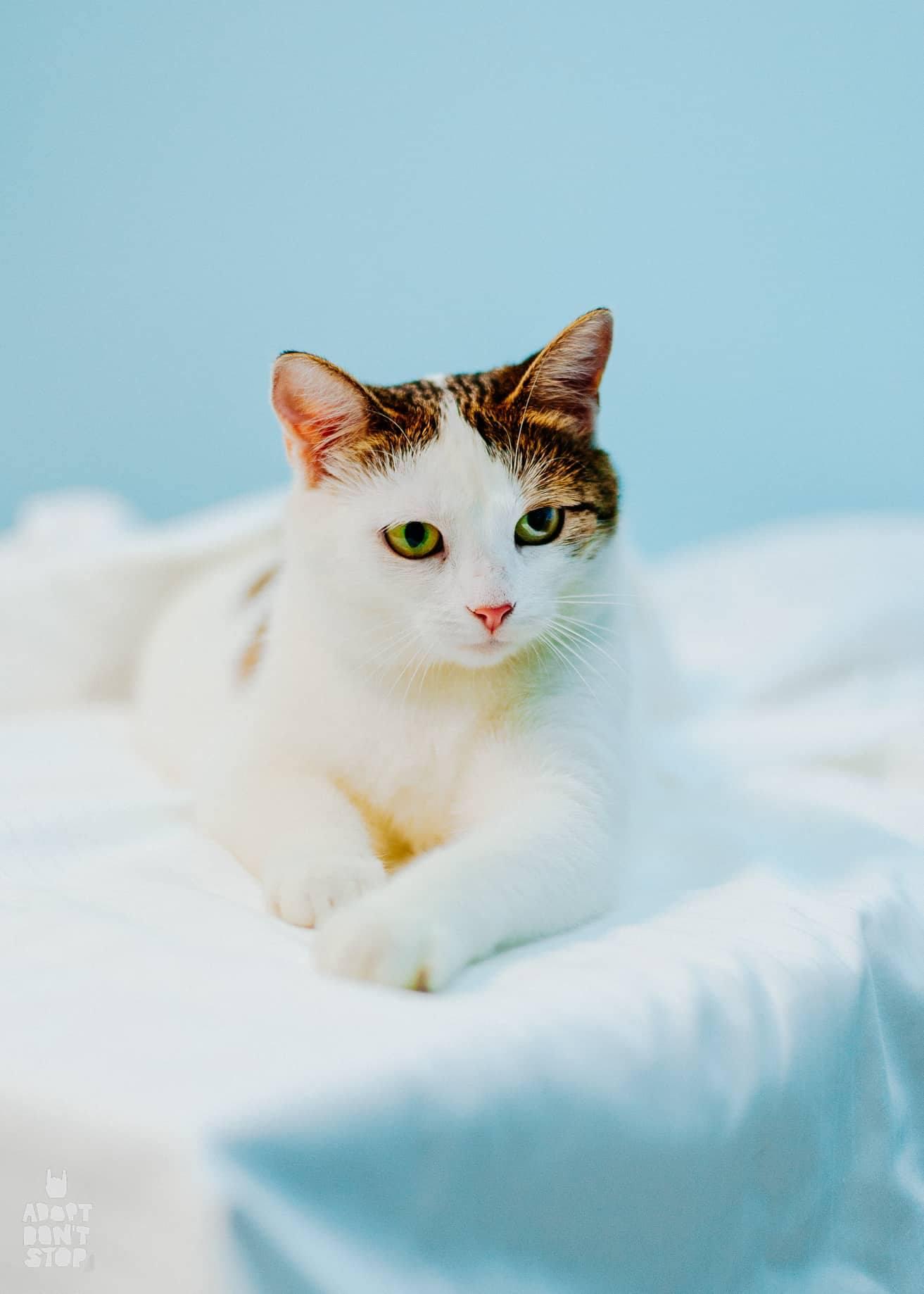 Не треба боятися ВІК.Діагноз не означає, що кіт буде постійно, часто чи сильно хворіти чи мучитися, зовсім ні!Це не вирок -