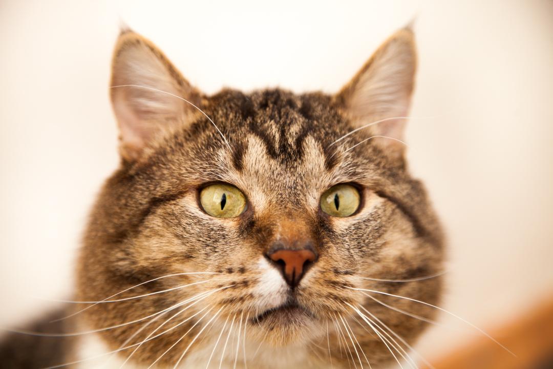 Если вам понравился кот, вы ощущаете, что он ваш, то забирайте.Жизнь вообще штука мало предсказуемая.Так что, будьте смелее, что ли! -