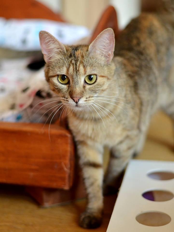"""Софико - объясняет, что часто """"кусь"""" делается тогда, когда у котика что-то болит. Или ранка в месте поглаживаний, или что-то совсем другое."""