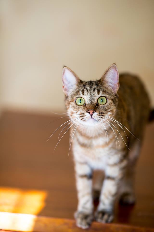 """Кати - часто обсуждает с подружками, что раздраженные котики - страшные котики. Они могут не только """"кусь"""" делать, но и """"царап"""", """"хап за ногу"""" и другие приемы."""