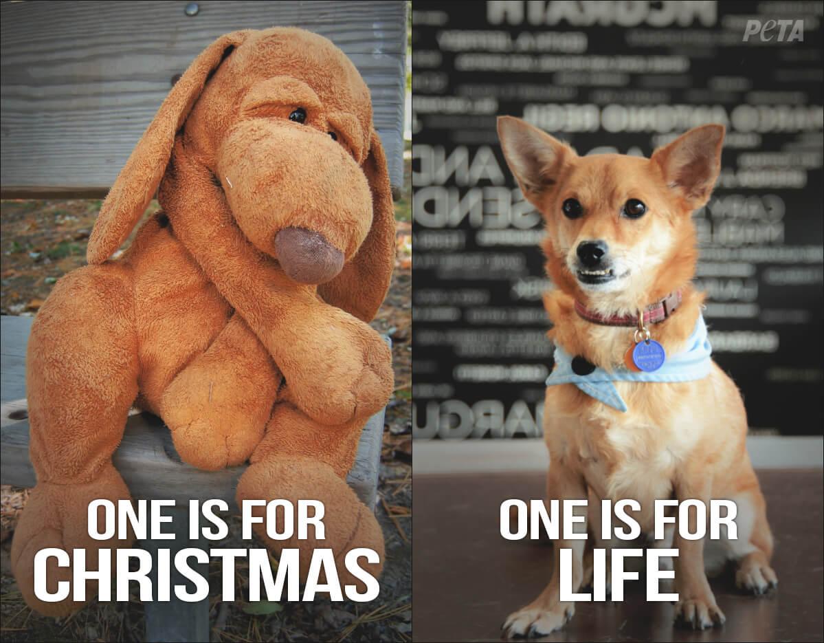 Один на Рождество, другой на всю жизнь