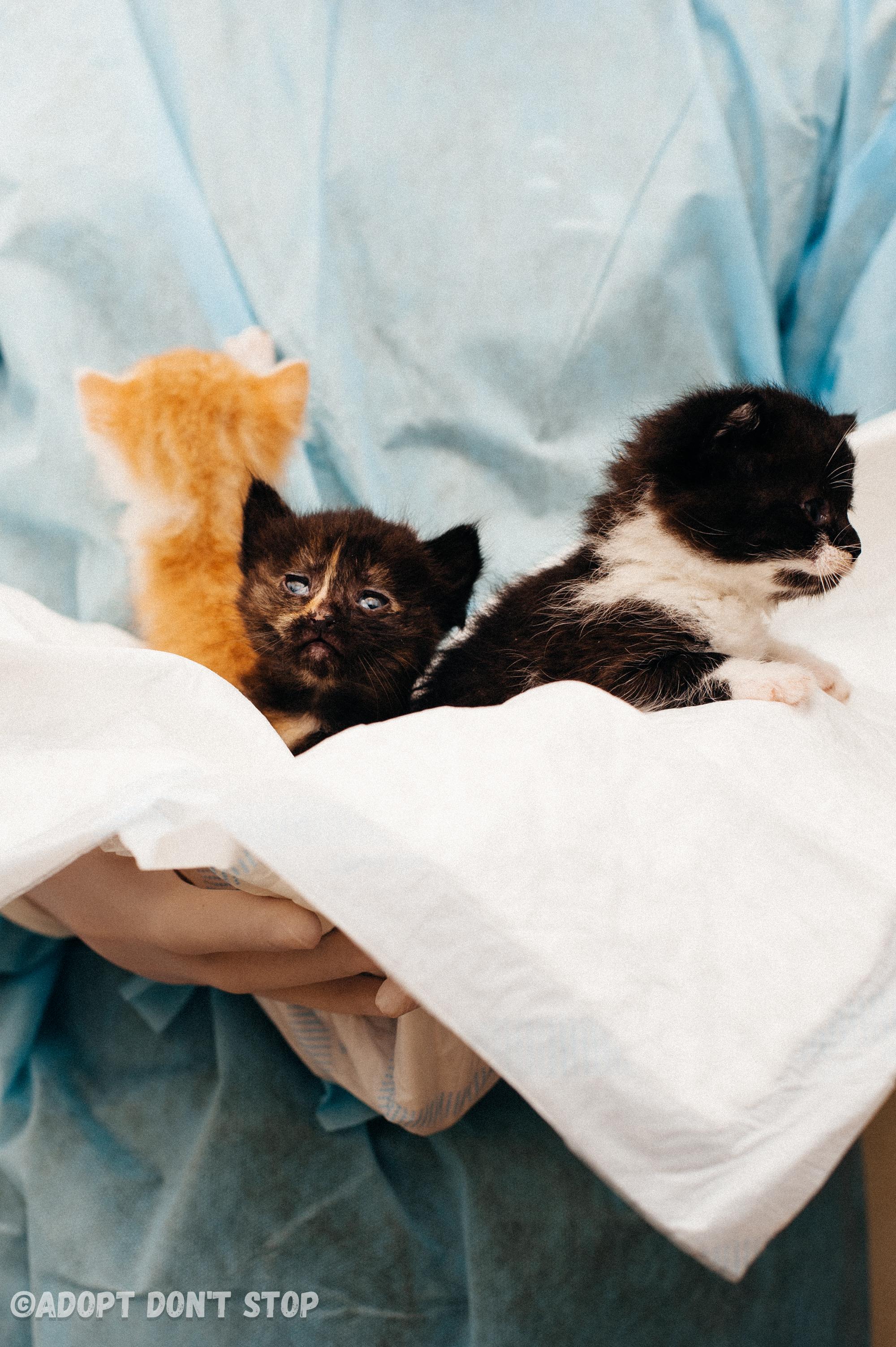 Наші підопічні кошенята.  Годуємо, лікуємо і будемо шукати найкращі родини для них!