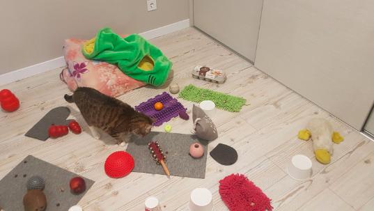 Збагачене середовище для кота, щоб він не лінувався та був активним.  фото Наталії Мартишко