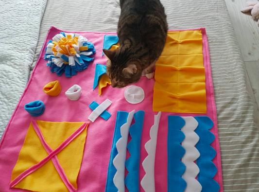 Цікавий розвиток для 14-річного кота. З такими цікавинками ваша тваринка точно не буде млявою!  фото Наталії Мартишко
