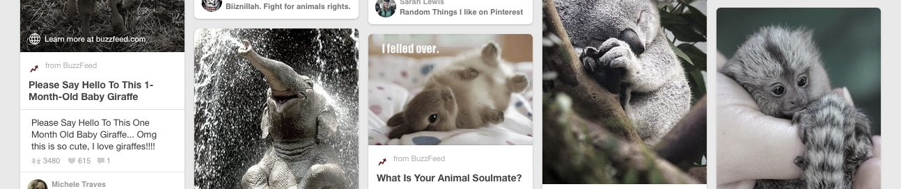 Sorry, clumsy bunny rabbit but I'm sure I'll find something cuter if I just keep scrolling.