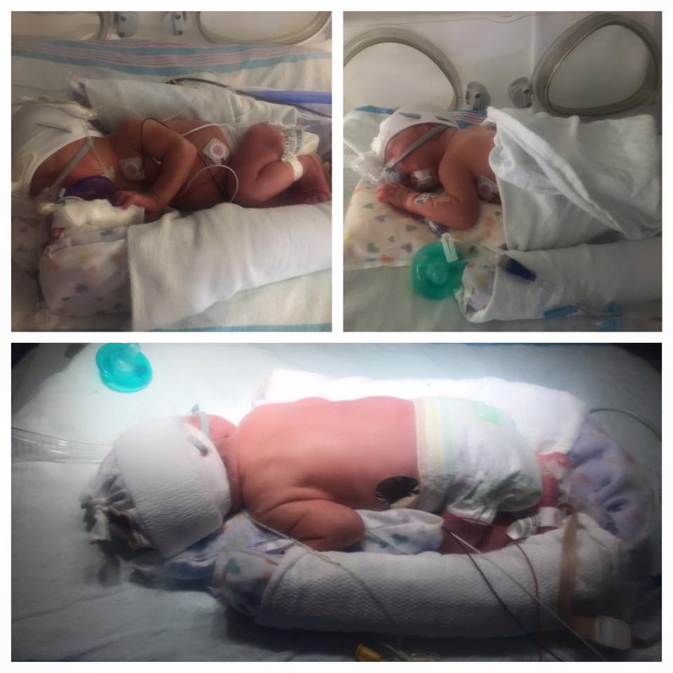 8 days old. (Top Left) Elly; (Top Right) Izzy; (Bottom) Xander.