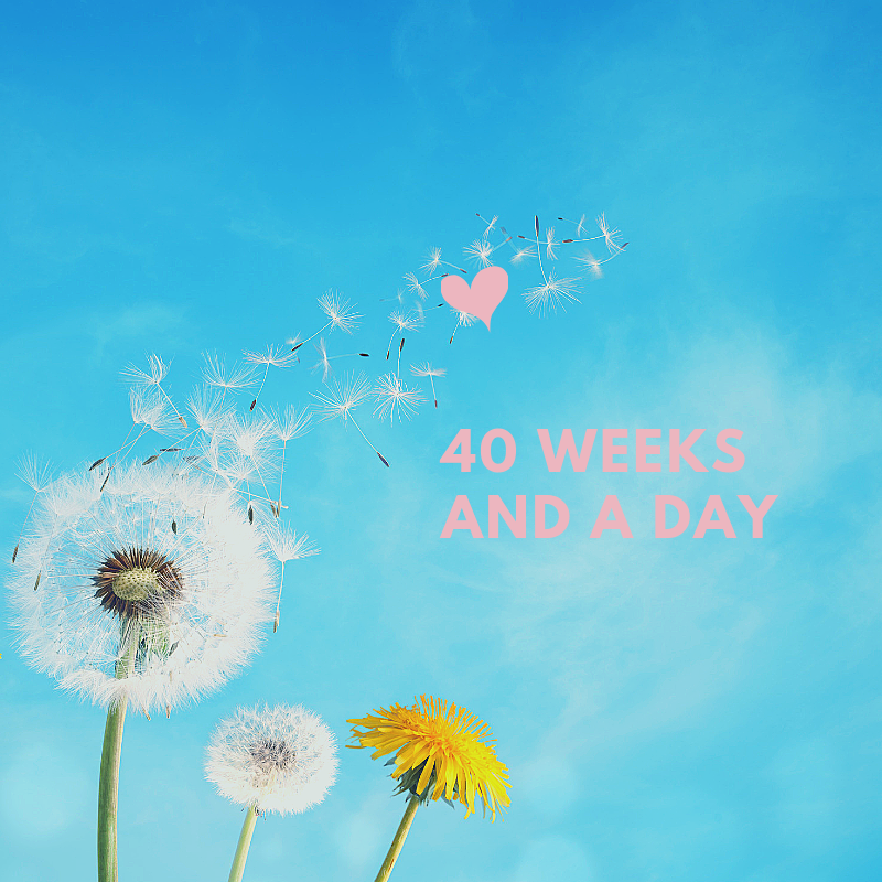 40 weeks and a day 1.png