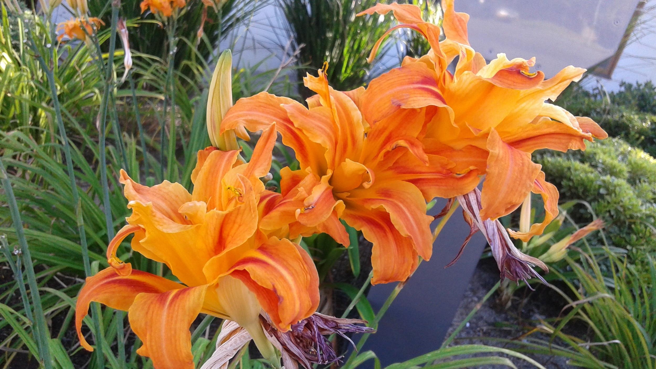 flower energies