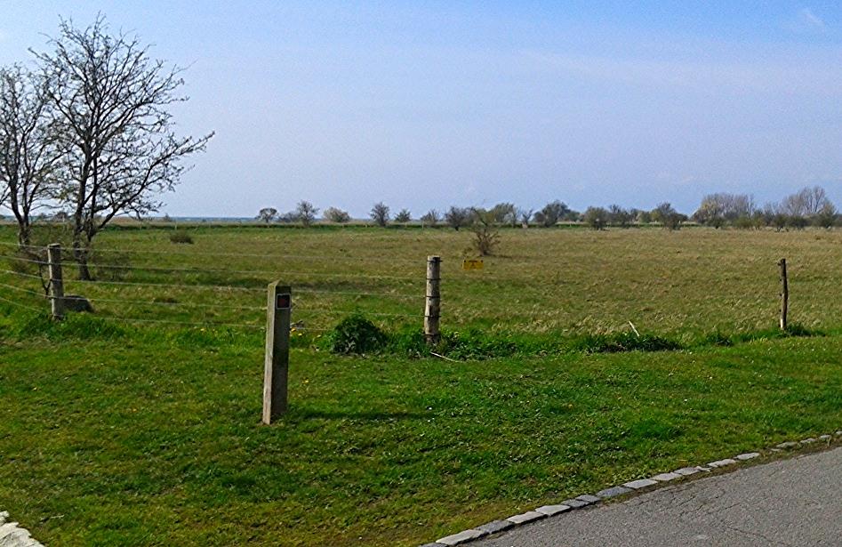 Denmark is a treat; I was needing the grass.