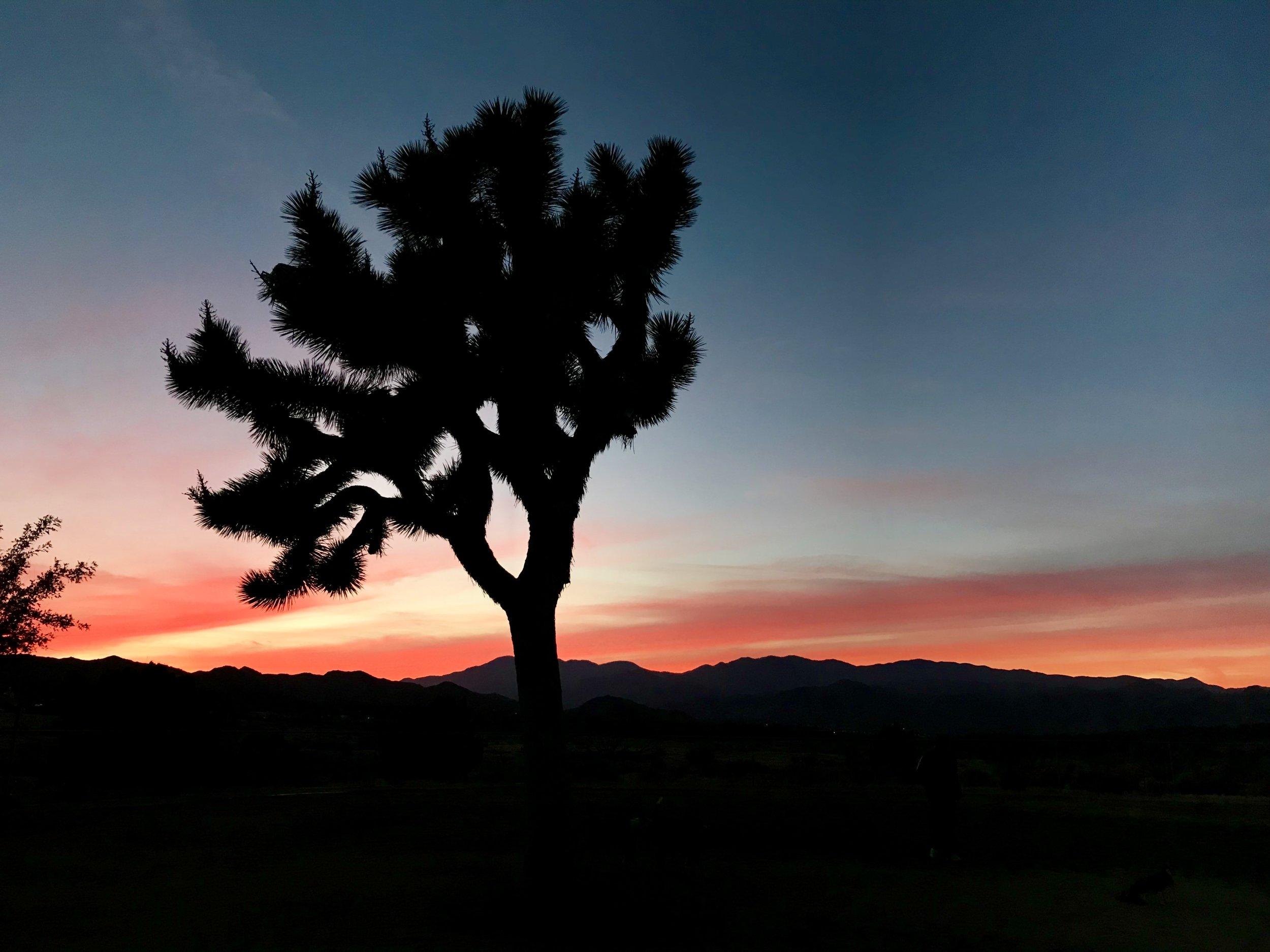 Sunset photo taken the other day by my husband Brad Klopman.