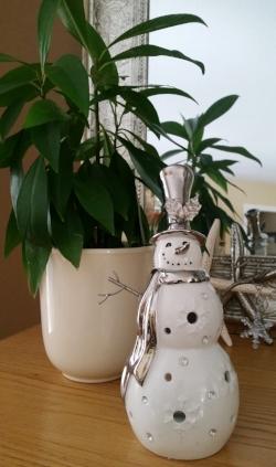 Plant with Snowman.jpg