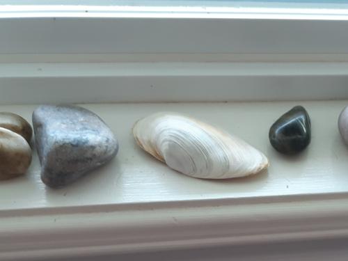 Stones & Shells on Window Ledge.jpg