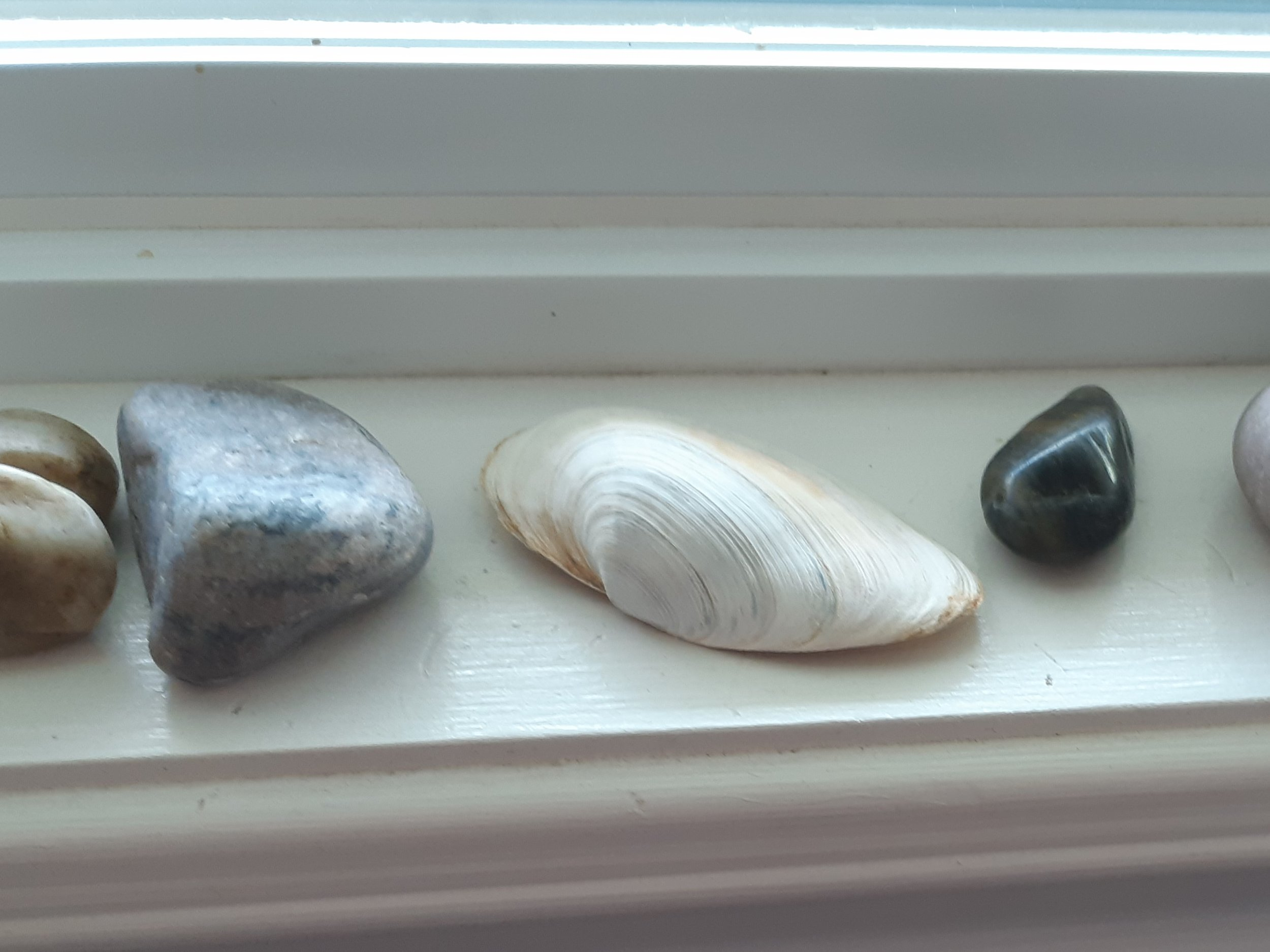 Stones & Shells on Window Ledge.jpg