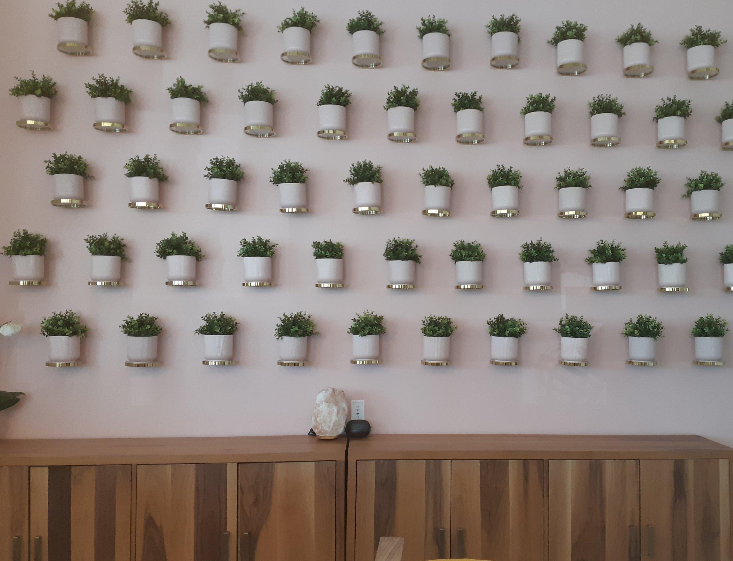 Feature Wall - Plants.jpg